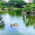 Resting Turtles on a Rock at Kiyosumi Japanese Gardens in August.