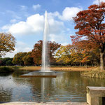 Fountain at Yoyogi Park in November.