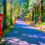 A Road to Hakone Shrine.