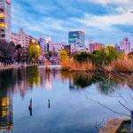 Sinobazu Pond in Ueno Park.