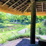 At Japanese Gardens in Meiji Shrine.