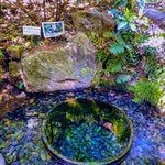 Wellspring at Japanese Gardens at Meijii Shrine.