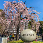 At The Entrance of Ueno Park in Spring.