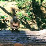 Friendly squirrel at Inokashira Zoo in Kichijoji.
