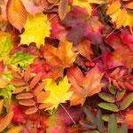 © proslgn - Fotolia.com 92839206/Buntes Herbstlaub