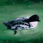 Bufflehead, 2002 Oil on canvas, 16 x 20 inches