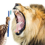 Recallkarte Zahnmedizin Löwe
