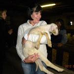 Visite de bergerie doux comme un agneau!!!