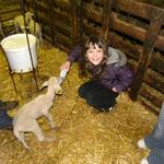 Chambre d'hôtes : Visite de ferme