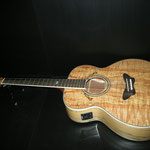 Daisy Rock Butterfly Jumbo Acoustic Electric Spolted Maple カレッジギターズ
