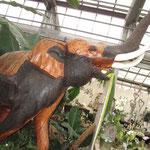 Orchideen werden auch in Thailand gezogen