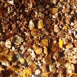 板山産種子
