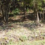 林床をきれいにしたヒメサユリ植付け地