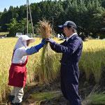 初めての稲刈り。束ね方を習う