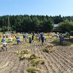 稲刈り体験イベント1