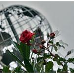Die Rose, die Welt und dahinter die Reihenhäuser