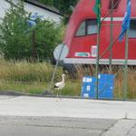 Und nun auch noch eine Bahn. Was für eine gefährliche Ecke.  Foto: Ulrike Mose  29.07.2013