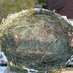Nest drauf gebaut,    Foto: Ulrike Mose