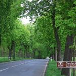 Impressionen der Deutschen Alleenstraße