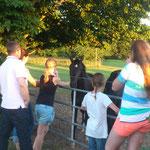 Pferdebesichtigung ;)