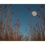 Mond eingefügt