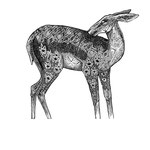 Doe, Available in the SHOP
