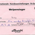 CACIB St. Gallen 2012: 1st show puppy class - puppy winner! Judge Esther Joseph, Australia