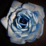 Rosa, acrilico