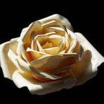 Rosa, acquarello