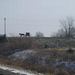 Zug und Kutsche, Transportmittel der Amischen