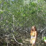 Lena im Wunderland (Mangrovenwald in Uvita)