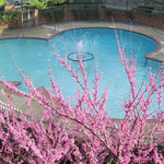 Hotelpool in Fairfax, Virginia