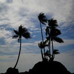 Palmen in Corcovado