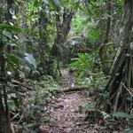 Durch den Dschungel.