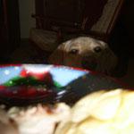 Wenns Essen gibt, ist Lucy meine beste Freundin.