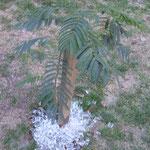 Auch ein Weg, eine Pflanze zu gießen