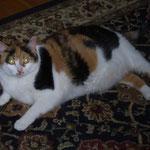 Matilda, die fette Katze