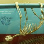 """""""Bones & Reptiles"""" im National Museum of Natural History"""