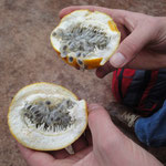 Meine Lieblingsfrucht (Granadilla)