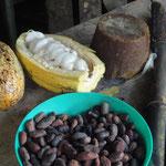 Schokoladenherstellung aus Kakaobohnen (unten, links oben Kakaofrüchte) und Dulce (Rohzucker, oben, der aus Zuckerrohr, rechts, gewonnen wird)