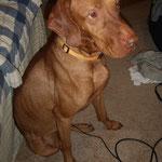 Foster, der Hund, der es geahnt hat