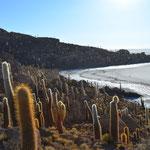 Auf der Insel Incahuasi.