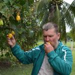 Nur den Bürgermeister darf ich fotografieren, hier mit Cashew-Früchten in seinem Obstgarten.