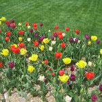 Frühling in Overland Park
