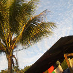 Wäsche & Wellblech (links eine Kokospalme)