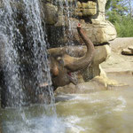 Elefant im St. Louis Zoo