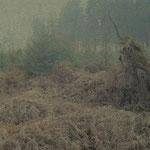 Dein Wald 2009