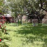натуральный плетеный забор