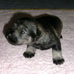 Ilvie mit 2,5 Wochen