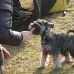 beim Training in der Hundeschule